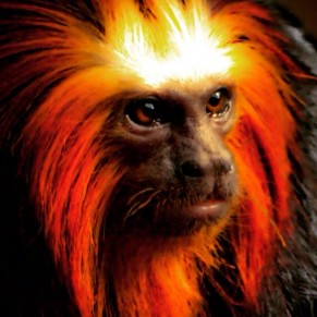 New Year of The Fire Monkey (2016)